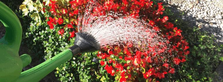 arrosir les plantes avec un arrosoir