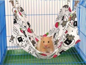 souris dans une cage avec accessoires
