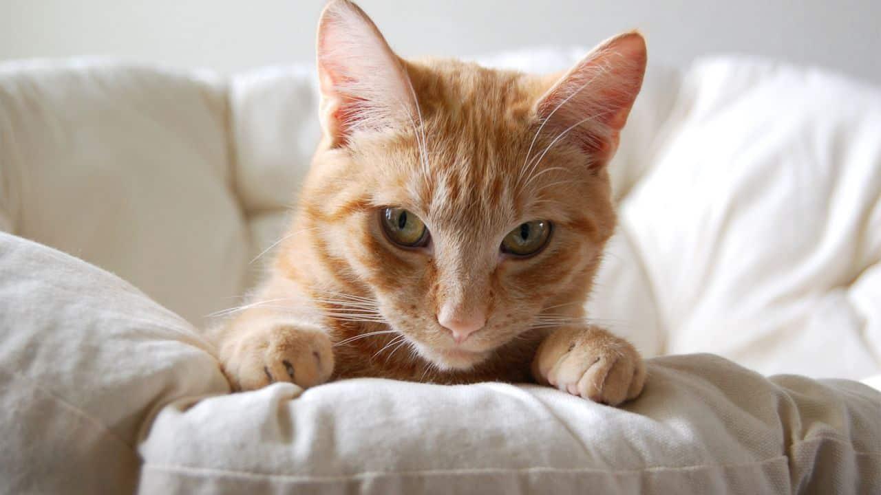 panier pour chat avec un chat