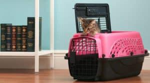 transport pour un chat petit