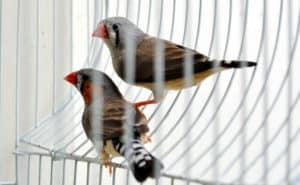 deux oiseaux dans une cage
