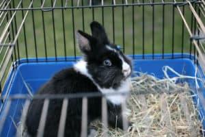 lapin dans une cage