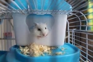 petit souris dans une cage