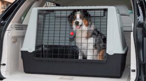 transport pour chien en plastique