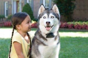 fille et chien avec un collier anti fugue