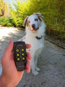 chien avec collier de dressage pour chien et un télécommande