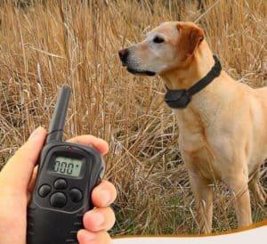 telecommande et chien avec collier de dressage pour chien