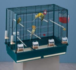cage à oiseaux moderne
