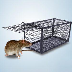 piège à rats avec rat