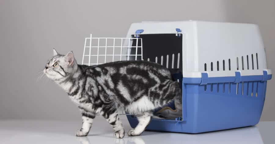 chat en sortint d'un transport pour chat