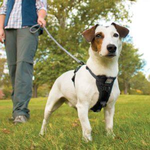 petit chien avec harnais pour chien