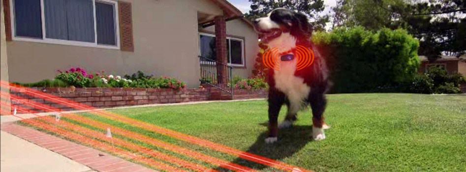 chien avec collier anti fugue