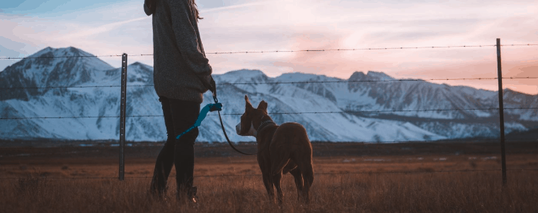 femme et chien avec collier de dressage pour chien