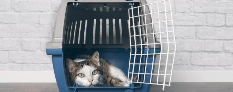 transport pour chat en plastique