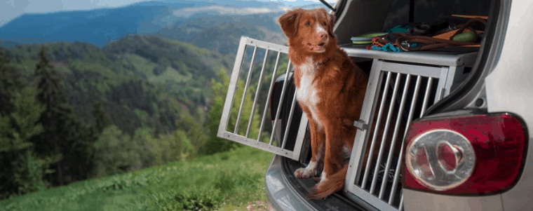 transport pour chien dans la voiture