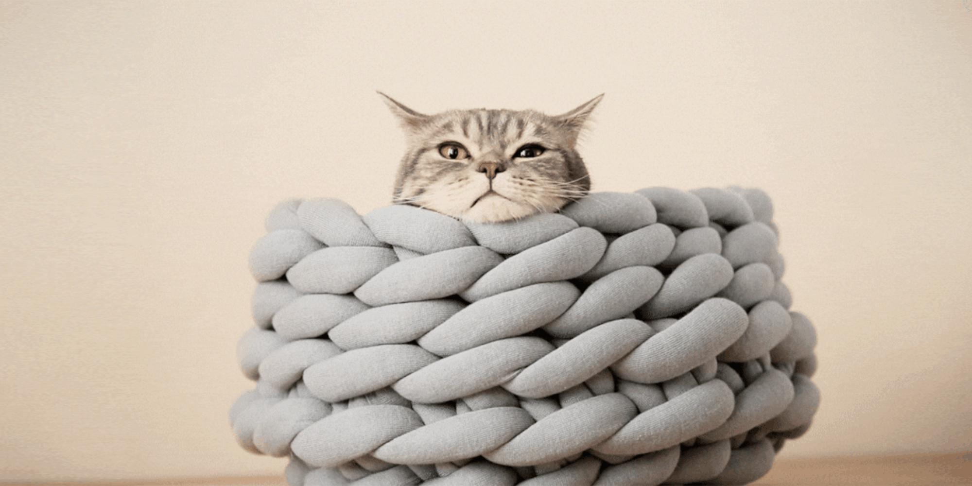 panier pour chat grande avec un chat