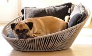 chien dans un panier pour chien petit