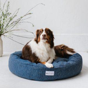 grand chien dans un panier pour chien