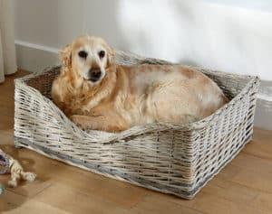 chien dans un panier pour chien grand