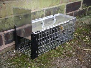 piège à rats dehors