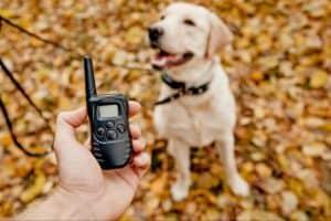 telecommande d'un collier de dressage pour chien
