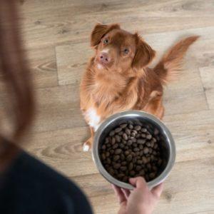 femme avec croquettes pour chien