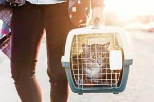 personne avec un transport pour chat