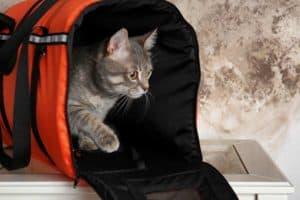 transport pour chat petit