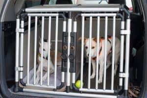 transport pour chien grand